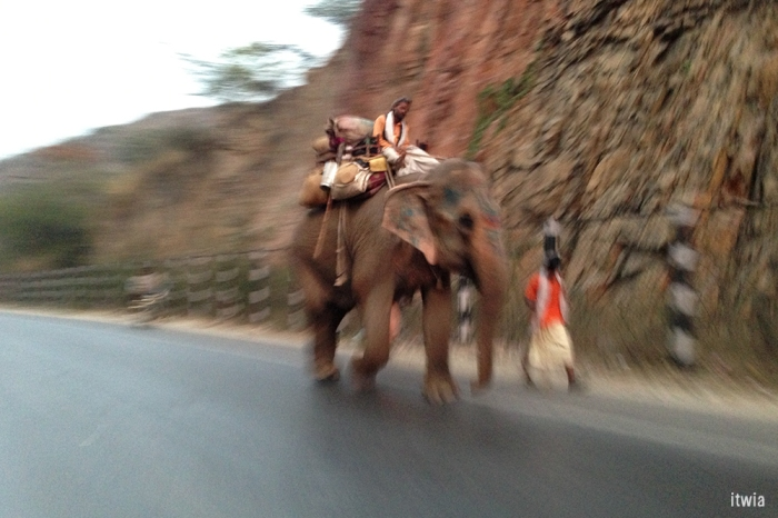 itwia_rajasthan_elephant1