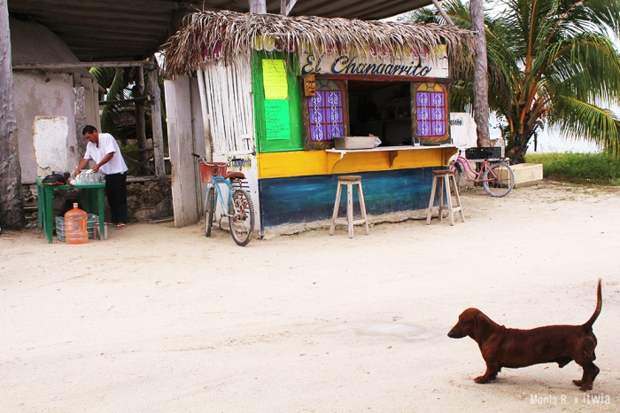 itwia_mexique_holbox3