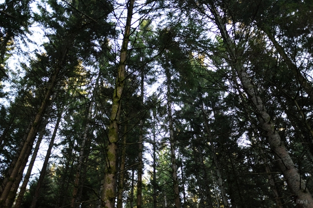 itwia_vosges_foret11