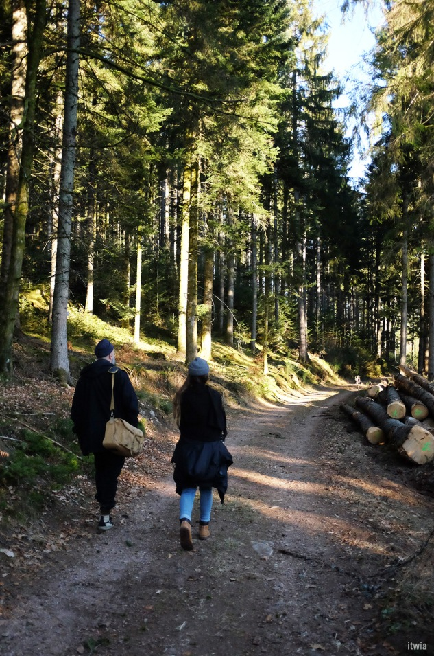 itwia_vosges_foret15