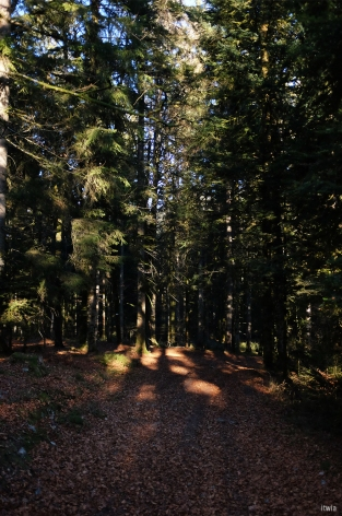 itwia_vosges_foret2