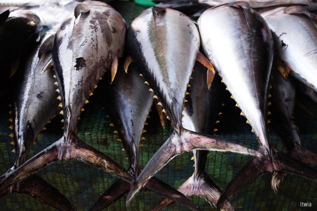 itwia_muscat_fishmarket5