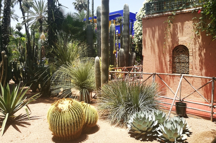 itwia_marrakech_majorelle13