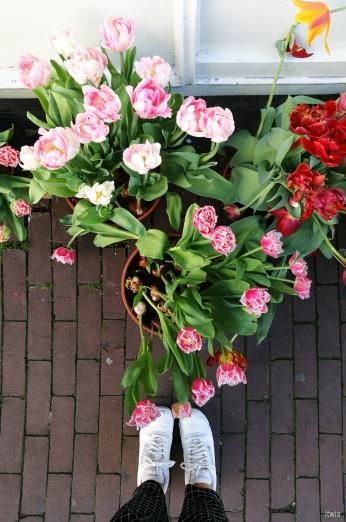itwia_amsterdam_tulipes1