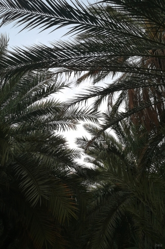 itwia_emirats_alAin4